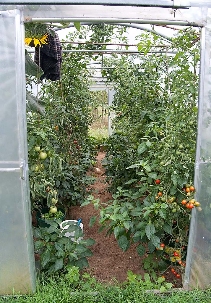tomaten op reis