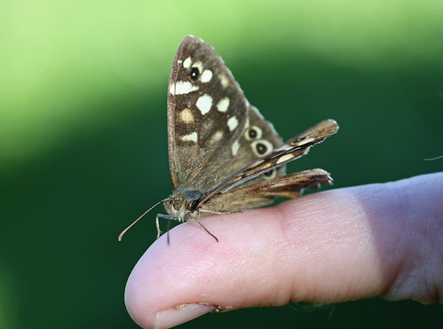 Butterfly on my finger