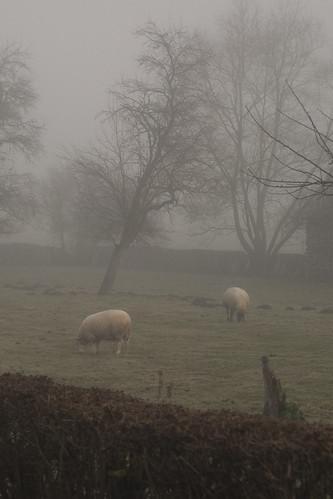 Foggy_Lessive_071128_28_071128-2