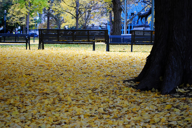 Stacey's Leaves in the park