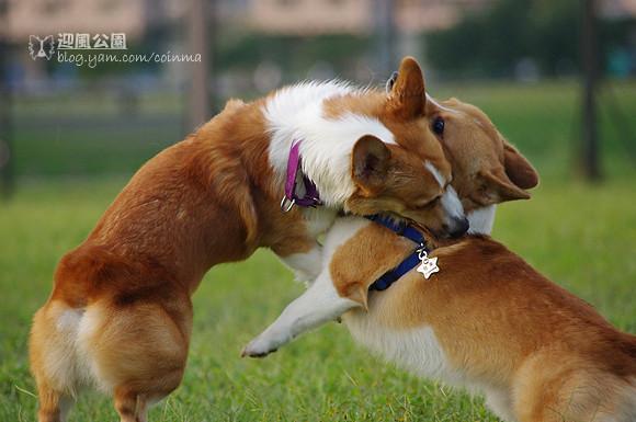 迎風公園拍狗狗