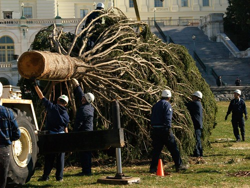 """Transport crewmembers prepare the Capitol Christmas Tree to be lifted from its flatbed cradle on First Street along the west side of the Capitol building Monday, November 29th."" USFS photo by Keith Riggs"