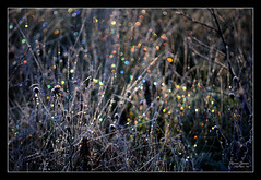 Natures Fairy Lights (Karen James) Tags: grass geotagged hoarfrost icecrystals colouredlights