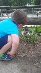 """Paul at the Deanna Rose Children's Farmstead • <a style=""""font-size:0.8em;"""" href=""""http://www.flickr.com/photos/109120354@N07/35311307090/"""" target=""""_blank"""">View on Flickr</a>"""