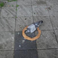 Duif eet Turks brood / Dove eats Turkish bread (Marien van der Heijden) Tags: amsterdam duif dove brood bread 2017 pide