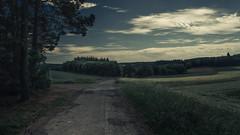 Eifel (Netsrak) Tags: landscape eifel landschaft path way weg feld field tree trees baum bäume
