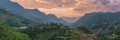 File153+66+67.0617.Lao Chải.Sapa.Lào Cai (hoanglongphoto) Tags: asia asian vietnam northvietnam northwestvietnam nature landscape scenery vietnamlandscape vietnamscenery vietnamscene panorama mountain mountainouslandscape sapalandscape sierra flanksmountain morning sunrise sky cloud hdr canon tâybắc làocai sapa laochải phongcảnh thiênnhiên núi phongcảnhsapa phongcảnhvùngnúi phongcảnhtâybắc buổisáng bìnhminh bầutrời mây sườnnúi dãynúi valley thunglũng canoneos1dsmarkiii canonef2470mmf28lisiiusmlens vietnammountainousscenery morninginsapa bìnhminhsapa sapabuổisáng