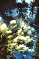 Łoś piątka! Elk ( moose ) - high five ! (Marat.Ph.Dakunin) Tags: elk moose five hello greetings clouds shape sky