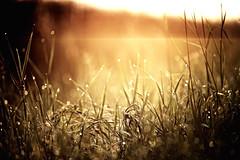(*Niceshoot*) Tags: morning water fog sunrise canon germany landscape deutschland eos drops wasser dof nebel bokeh saxony wolken drop dew sachsen 28 tau waterdrops tamron landschaft sonnenaufgang morgen morningdew wassertropfen 70200mm schsischeschweiz morgentau saxonswitzerland suissesaxonne tamron70200mm28 5dmkii