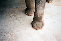 (Randy P. Martin) Tags: elephant feet animals