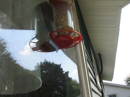 backdoor bird feeder