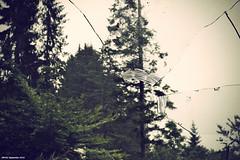 Broken Home (LilFr38) Tags: light france abandoned broken window hospital lumire crossprocess derelict fentre cmc cass abandonn hpital isre dlabr sainthilairedutouvet lilfr38 smcpentax50mmf17 asahipentaxmg centremdicochirurgical color200isofilm brokenhomepaparoach