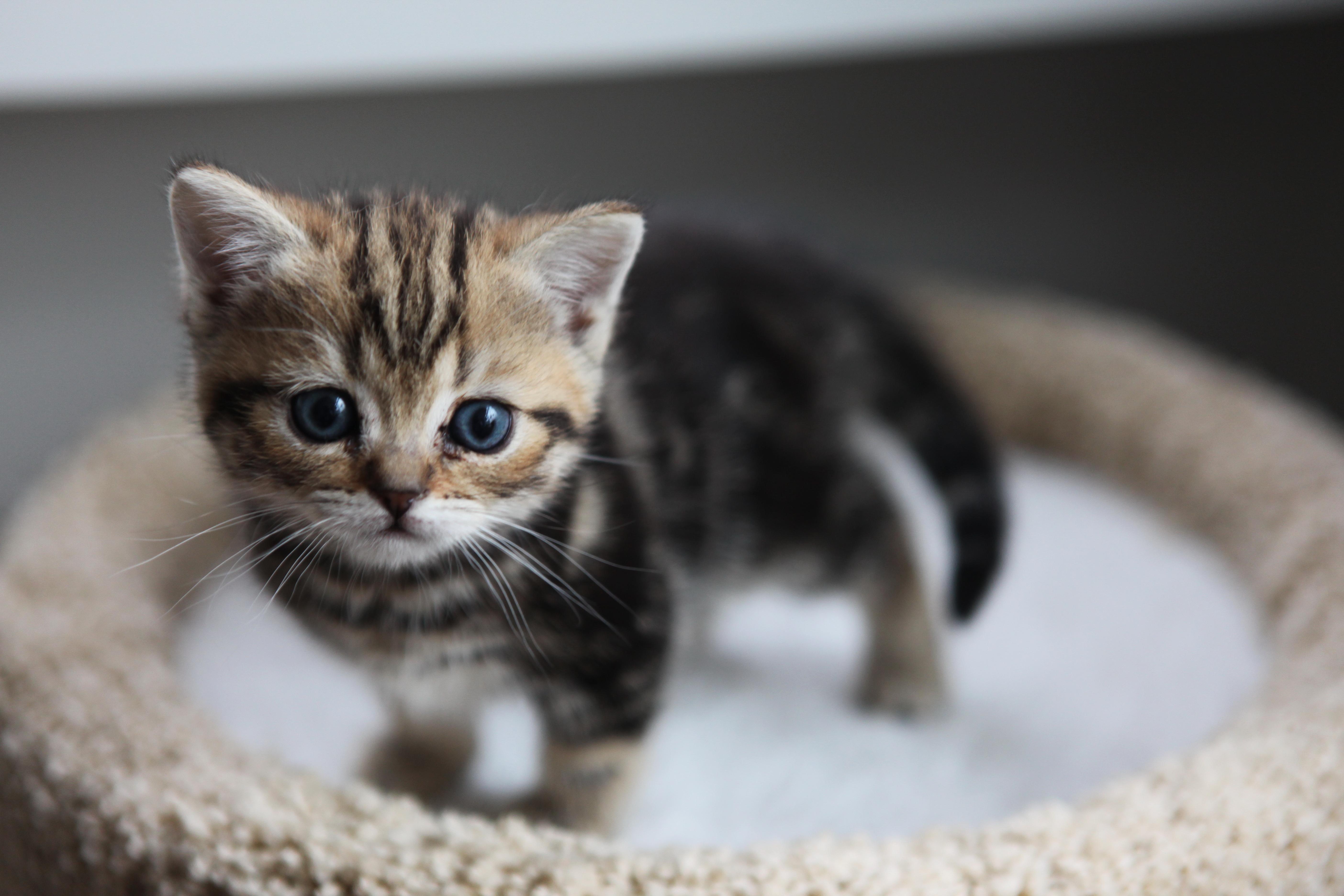 癒し】めっちゃ可愛い子猫100枚♪画像集 - naver まとめ