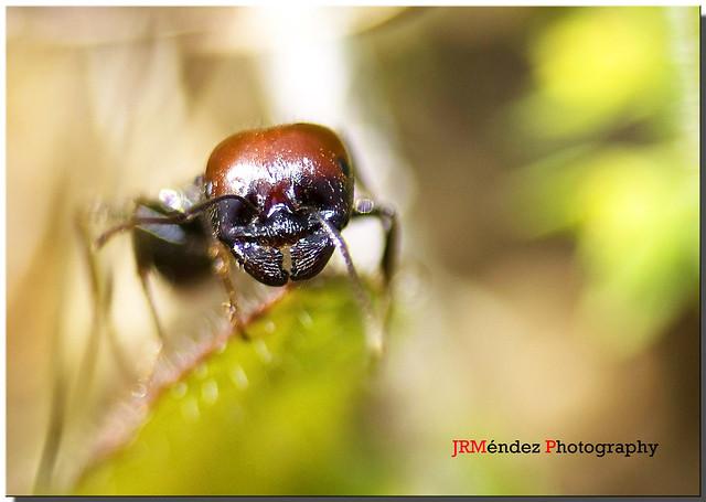 La hormiga que te mira