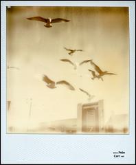 Polaroid - II (petecarr) Tags: polaroid
