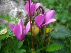 KRVAVEC  04.08.2010 (CLAUDIO 49) Tags: slovenia cielo fiori roccia azzurro colori monti baita prati krvavec pascolo boschi
