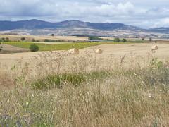 Vue sur champs, montagne et ciel en Espagne du cot de Burgos (Virginia Manso) Tags: blue nature landscape beige nopeople paisagem ciel pastels fields layers paysage montains strawbales