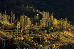 Falls Lit (M Atif Saeed) Tags: autumn pakistan light mountain mountains fall nature landscape shade lit areas northern hunza northernareas nagar gilgit atifsaeed gettyimagespakistanq1