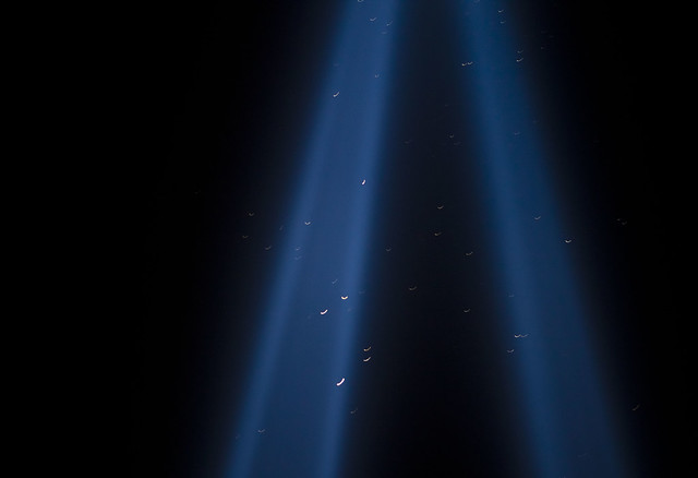 WTC 9/11 Tribute in Light, Bird flock