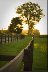 Evening Light (Matthew W. Fletcher) Tags: school autumn sun tree fall grass fence evening outdoor dusk september sunburst paddock