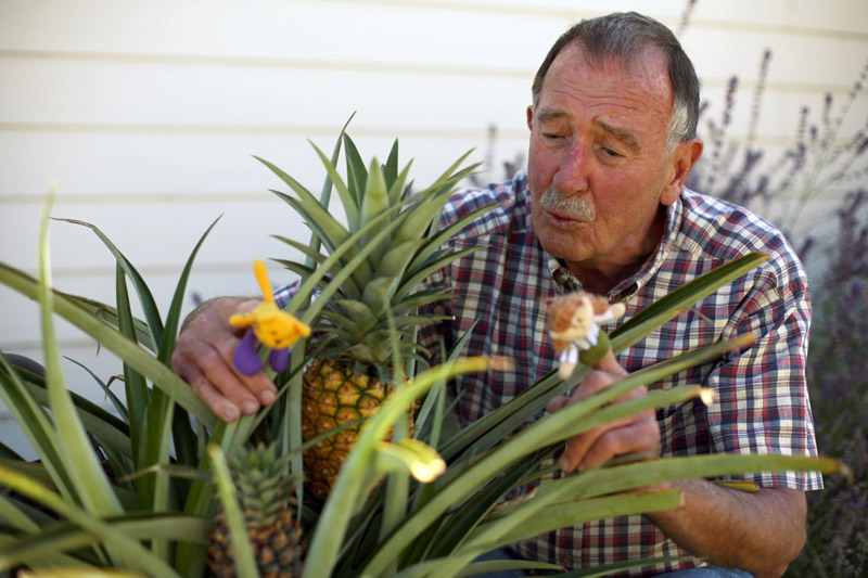 20100909_OUTHOUSE_PINEAPPLE_PORTRAIT_4
