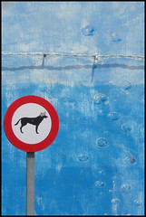 Warning.. Dogs (Robert~EOS~60D) Tags: sea vacation dog sun holiday hot beautiful sunshine sign warning lumix islands sand fuerteventura bubbles lanzarote playa panasonic blanca canary oliva corralejo tz3