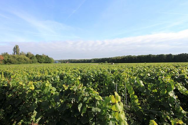 Dag van de Landbouw - Chardonnay Meerdael