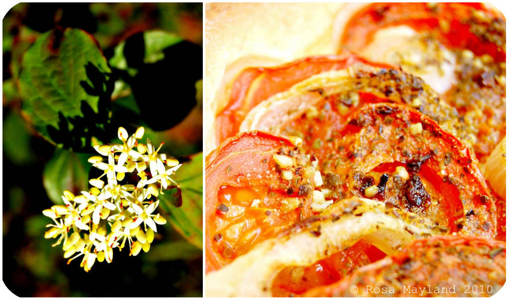 tomato Tart Picnik-Collage 5 bis
