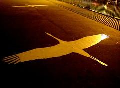 dwa (h9ooo-8) Tags: birds gdask ptaki wiadukt zaspa bociany czaple malowida iinnetakie orazabdzie