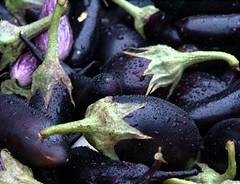 Eggplants in the Rain (Takoma Park, MD) (takomabibelot) Tags: rain geotagged farmersmarket eggplant maryland takomapark takomaparkfarmersmarket geo:lat=3897436559 geo:lon=7701241136