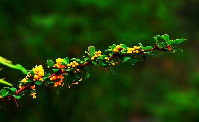 Jiuzhaigou flower4