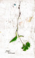 sprout of parsley