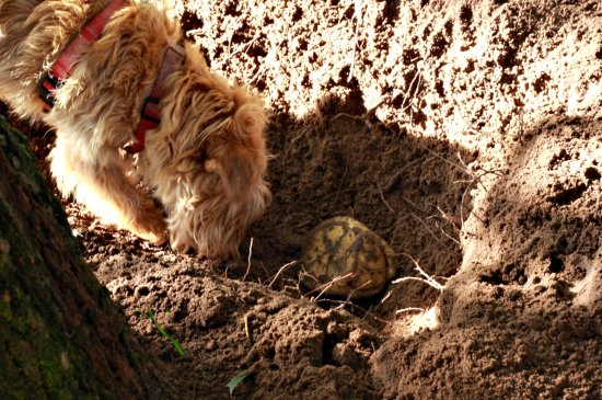 Buster & Turtle