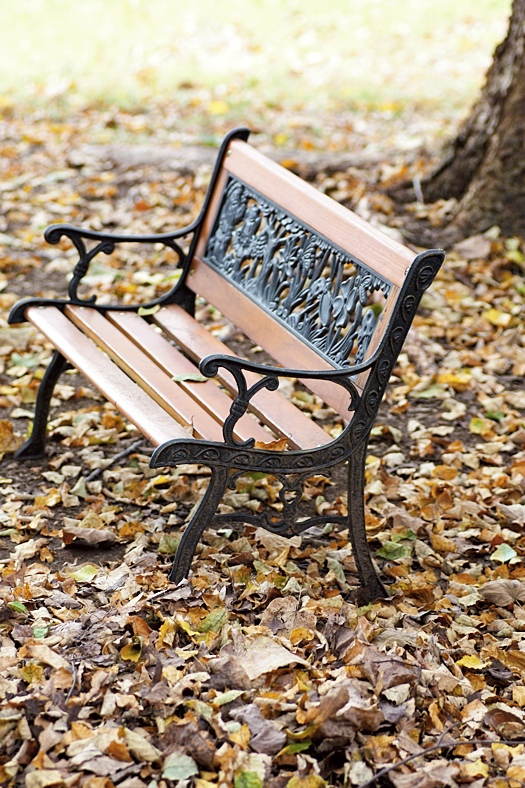 Bench and Leaves