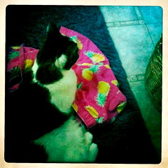 hipsta cat's pajamas