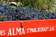 Tavel wine grapes (levork) Tags: france grapes tavel grenache rhone