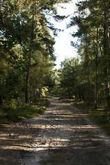 IMG_9155 (taliesin-DS) Tags: trees fall mushroom leaves forest mos bomen herfst bos heide paddestoelen bladeren wezepsche wezepse