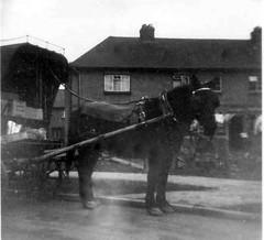 Co-op horse Stamford - The bike wrecker
