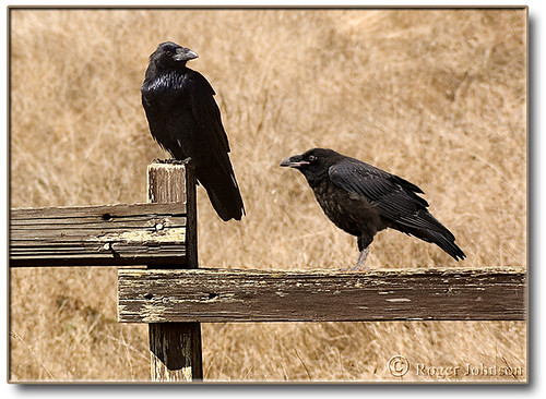 Raven's Roost