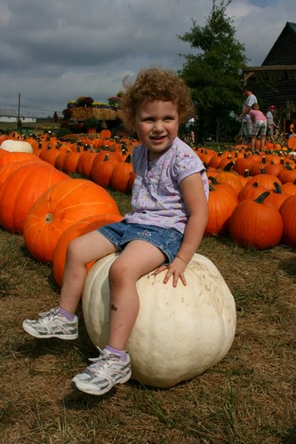 WhitePumpkinSitter
