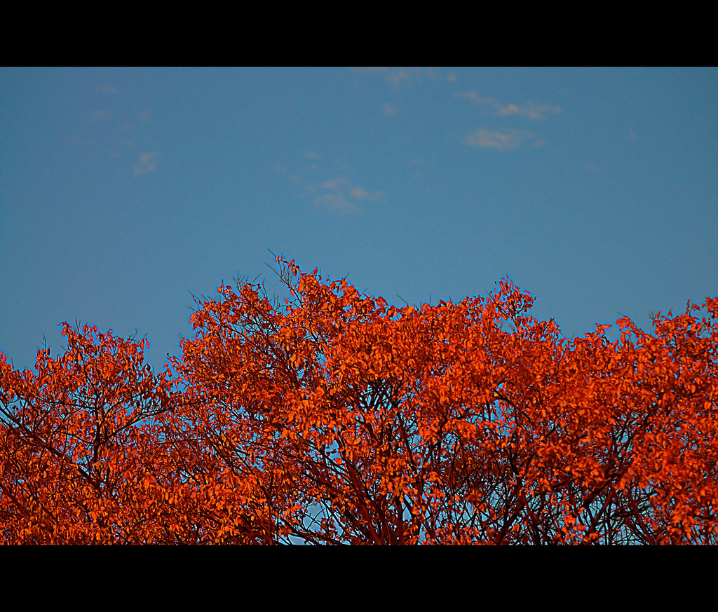 United Colors of Fall