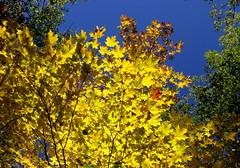 glow on (dmixo6) Tags: autumn trees sky canada colour beauty leaves maple change muskoka 2010 dugg dmixo6