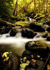 On Golden Creek (Darrell Wyatt) Tags: autumn trees light color fall water leaves creek golden leaf columbiarivergorge lindseycreek
