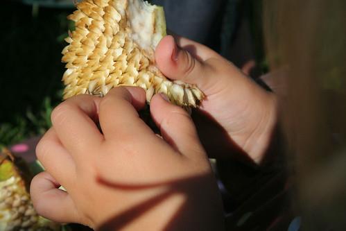 seed harvesting girl