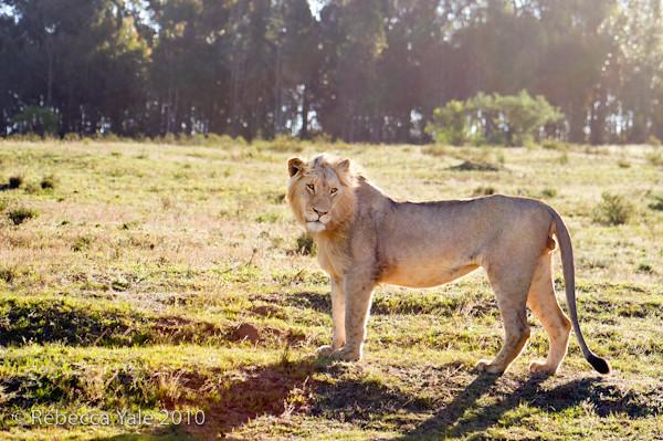 RYALE_Schotia_Safaris_28