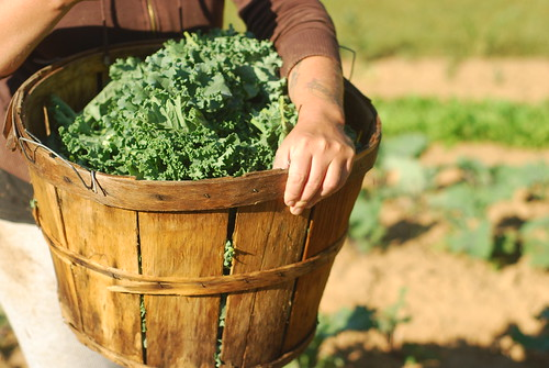 Bushel of kale