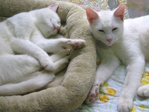 cute rescued white cats