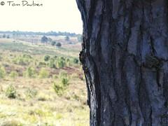 Ashdown Forest (Tom Dauben) Tags: tom forest sussex olympus east lee winniethepooh filters 06 grad aa graduated density milne ashdown neutral e500 06nd borderfx dauben wwwdaubencouk