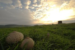 Mushrooms with a view (realityfanclub) Tags: mountains germany landscape mushrooms outside day afternoon eifel parasol landschaft fronrath