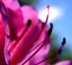 PA080031 (Ricardo Venerando) Tags: flowers flores flower nature brasil garden explore abc soe naturesfinest conservacion platinumphoto abcpaulista diamondclassphotographer ysplix grandeabc goldstaraward fotocultura